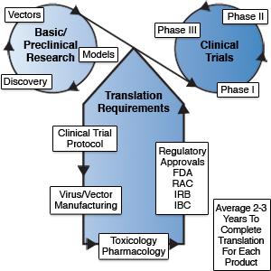Diagram of the gene and virus therapy development process