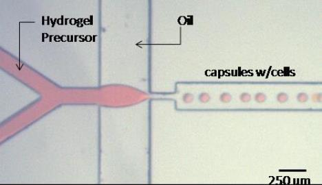Microfluidic device for fabricating microcapsules from the Cellular Microsystems and Biosensors Lab at Mayo Clinic.