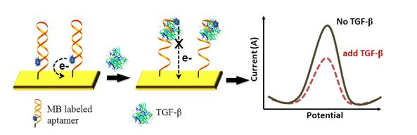 Aptamer-based electrochemical biosensors used for detection of TGF-β from the Cellular Microsystems and Biosensors Lab at Mayo Clinic.