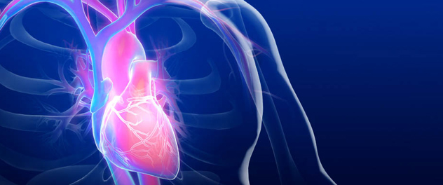 The Cardiovascular Research Center at Mayo Clinic is aggressively pursuing novel heart disease treatments.