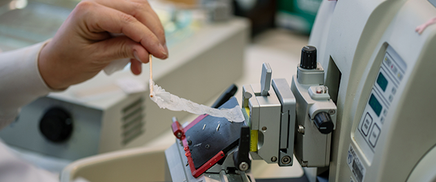 Tissue sectioning services for slide mounting or DNA or RNA extraction are provided by the Pathology Research Core at Mayo Clinic.