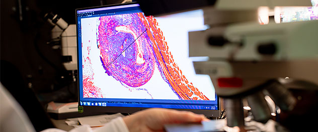Immunology imaging on a computer monitor