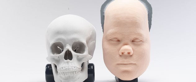 3D facial anatomical models