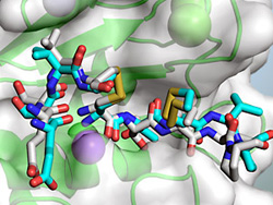 Active site cleft of a matrix metalloproteinase (MMP)