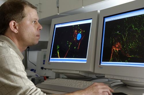 Tim Peterson - confocal imaging.